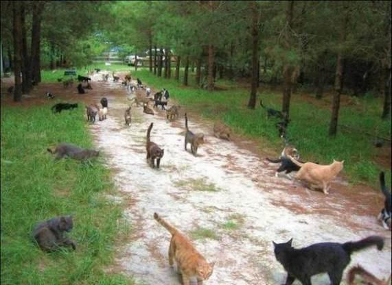cat-city-park