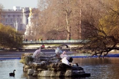 st james park pelicans