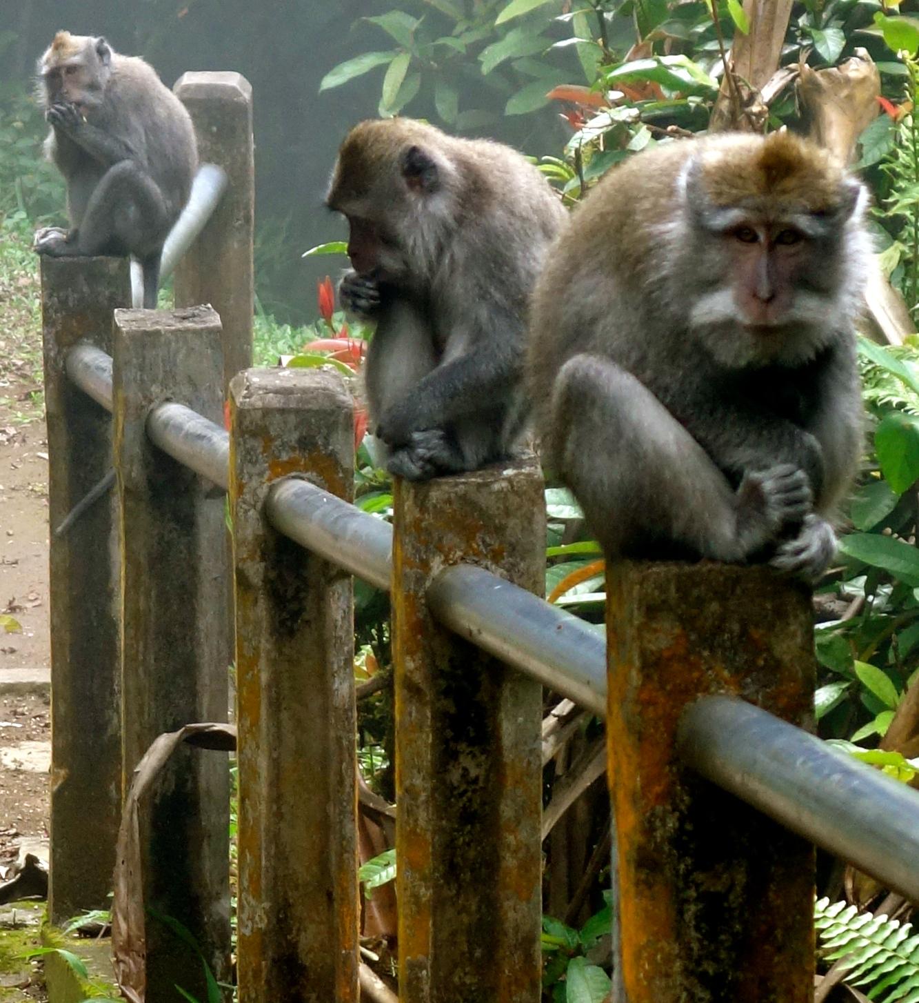 evil-monkeys.jpg
