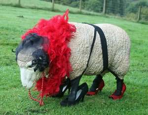 mutton dressed as lamb