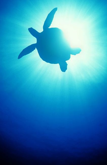 the-miracle-turtle